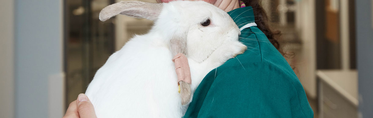 Rabbit Friendly Status