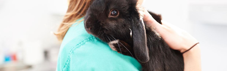 Free rabbit health checks throughout June!
