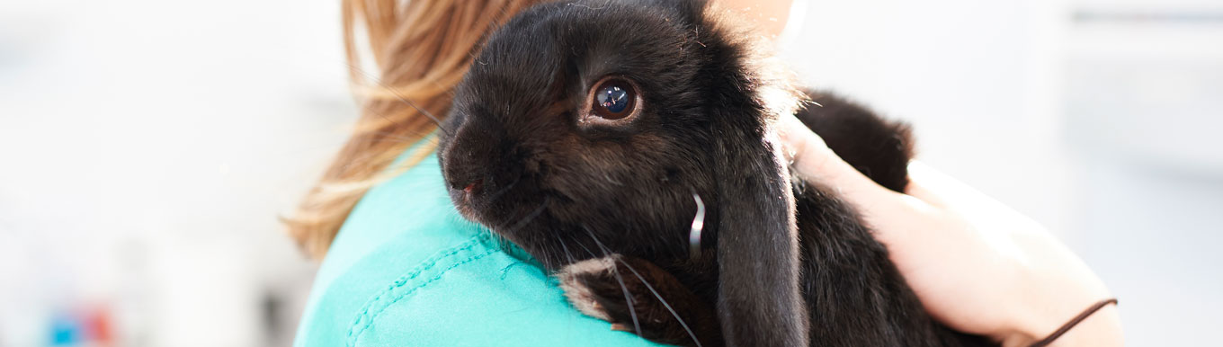 New service now included in the Rabbit Healthy Pet Club