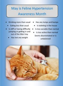 Feline hypertension awareness month